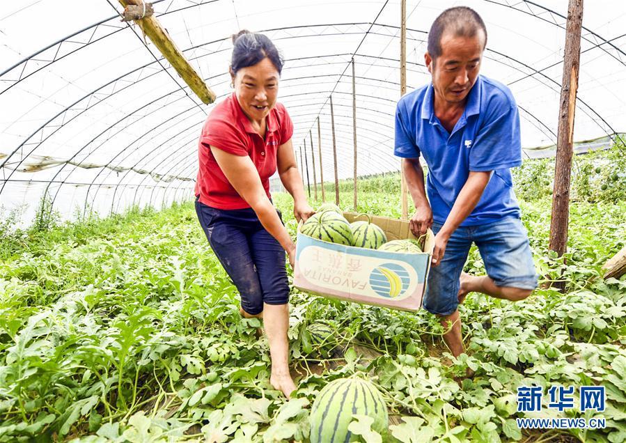 河北广阳:瓜果飘香富农家