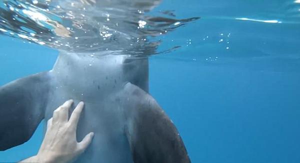 埃及渔民偶遇调皮海豚 挠其肚皮嬉戏玩闹