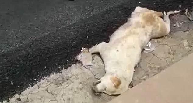 印度建筑工人将热沥青倒在熟睡狗狗身上致其死亡