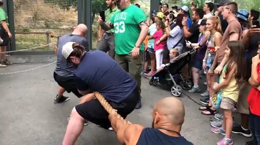 """打不过!三名职业摔跤手与狮子""""拔河比赛""""惨败"""