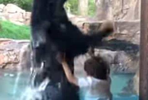 萌翻!美动物园小熊随玻璃窗外5岁小男孩共同蹦高玩耍