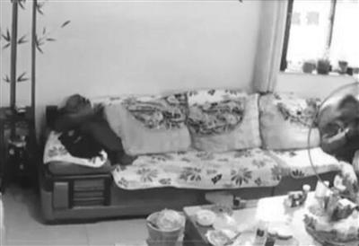"""毛贼偷探头监视孩子学习 不料自家客厅反被""""直播"""""""