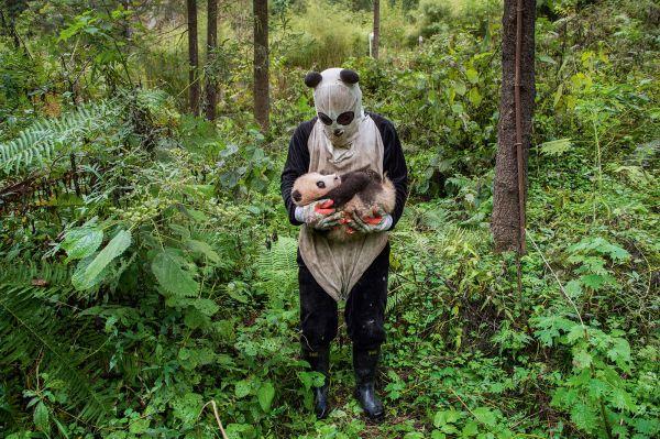 外媒:拯救大熊猫免于灭绝 这都是中国的功劳