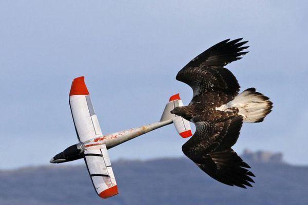 """任性海雕同滑翔机模型天空竞速 上演""""比翼双飞"""""""