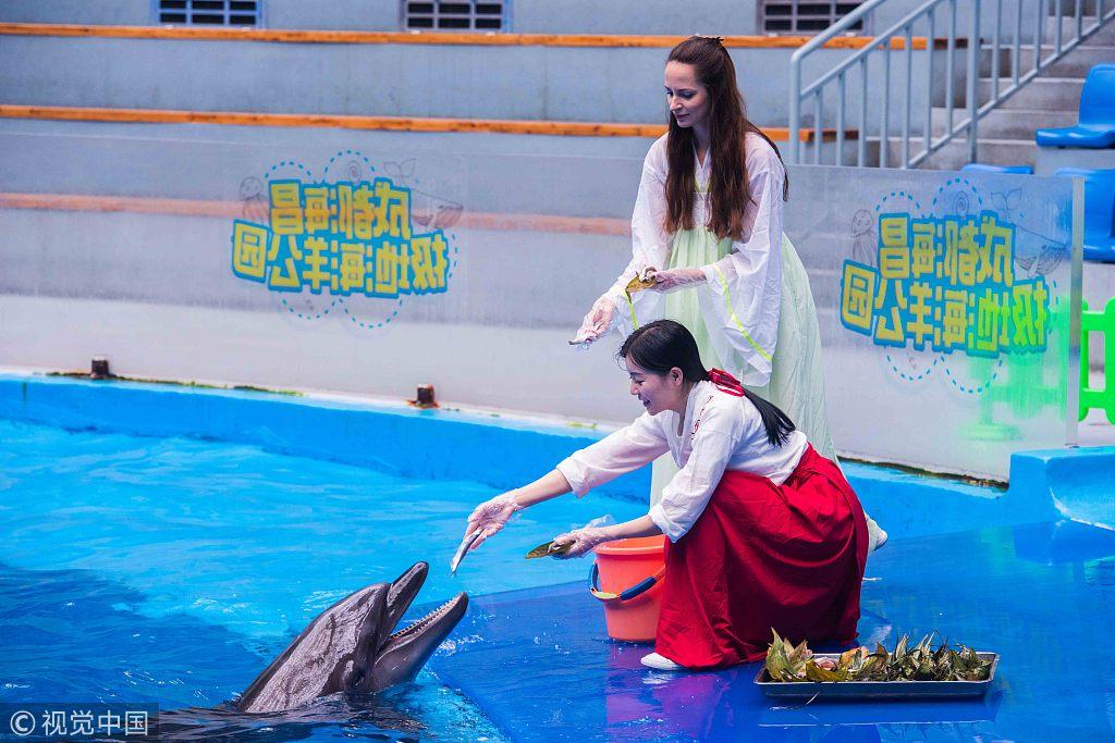 """海洋动物过端午 游客献上""""特制海味肉粽"""""""