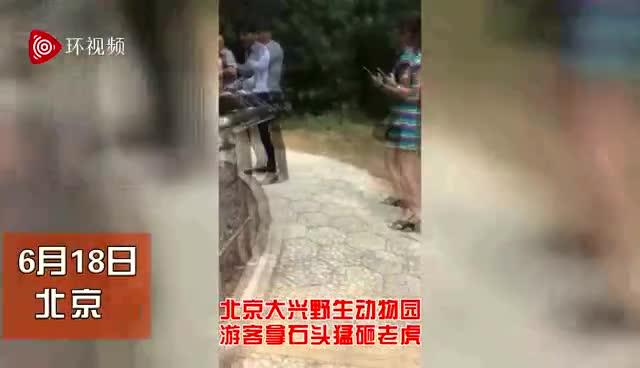 北京野生动物园游客被指用石头砸老虎 园方称正核实