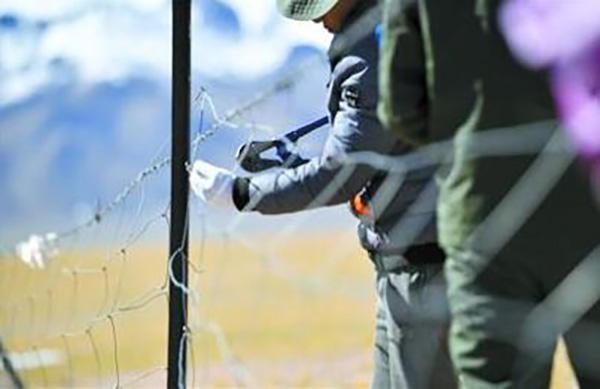 为藏羚羊迁徙让路 西藏拆除万亩草场围栏