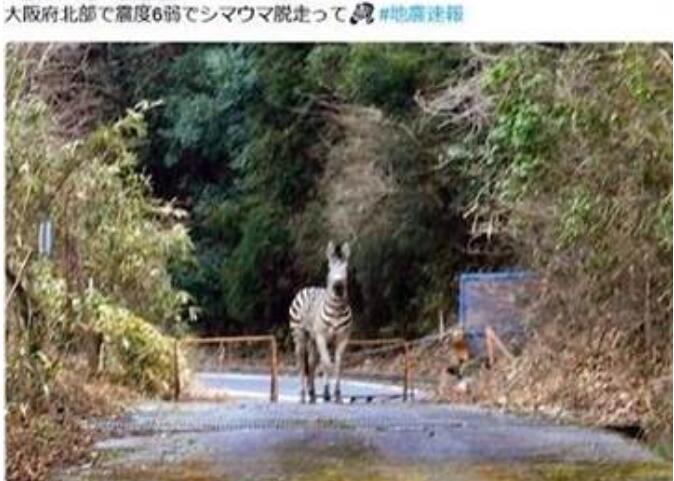 斑马逃跑、电车出轨... 大阪地震后假消息满天飞
