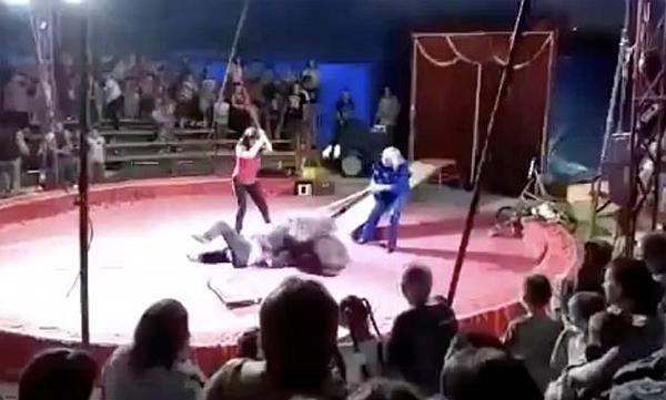 黑熊拒绝表演遭殴打 台上突然发飙撕咬驯兽员