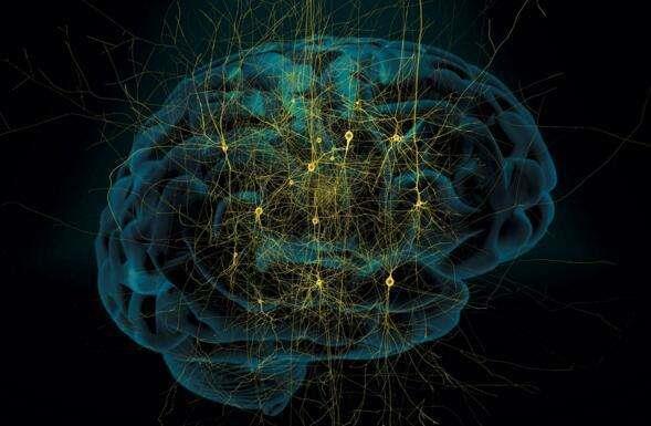 想揭示大脑奥秘?必须得先虚拟个大脑