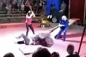 黑熊拒绝表演遭殴打 突然发飙撕咬驯兽员