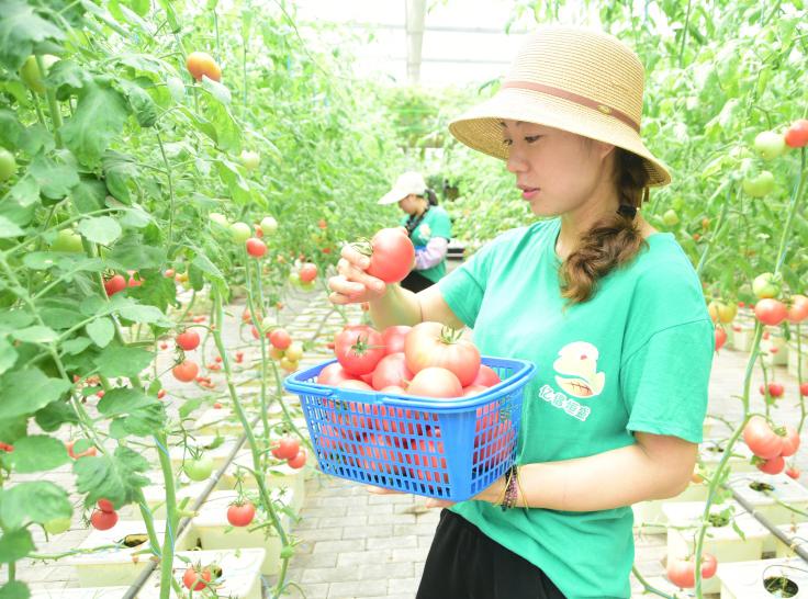 建德:无土栽培技术培育绿色蔬菜