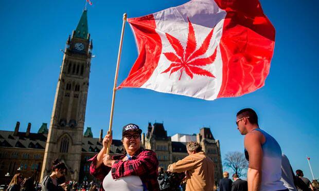 加拿大大麻合法化获参院批准立法 数月后正式生效