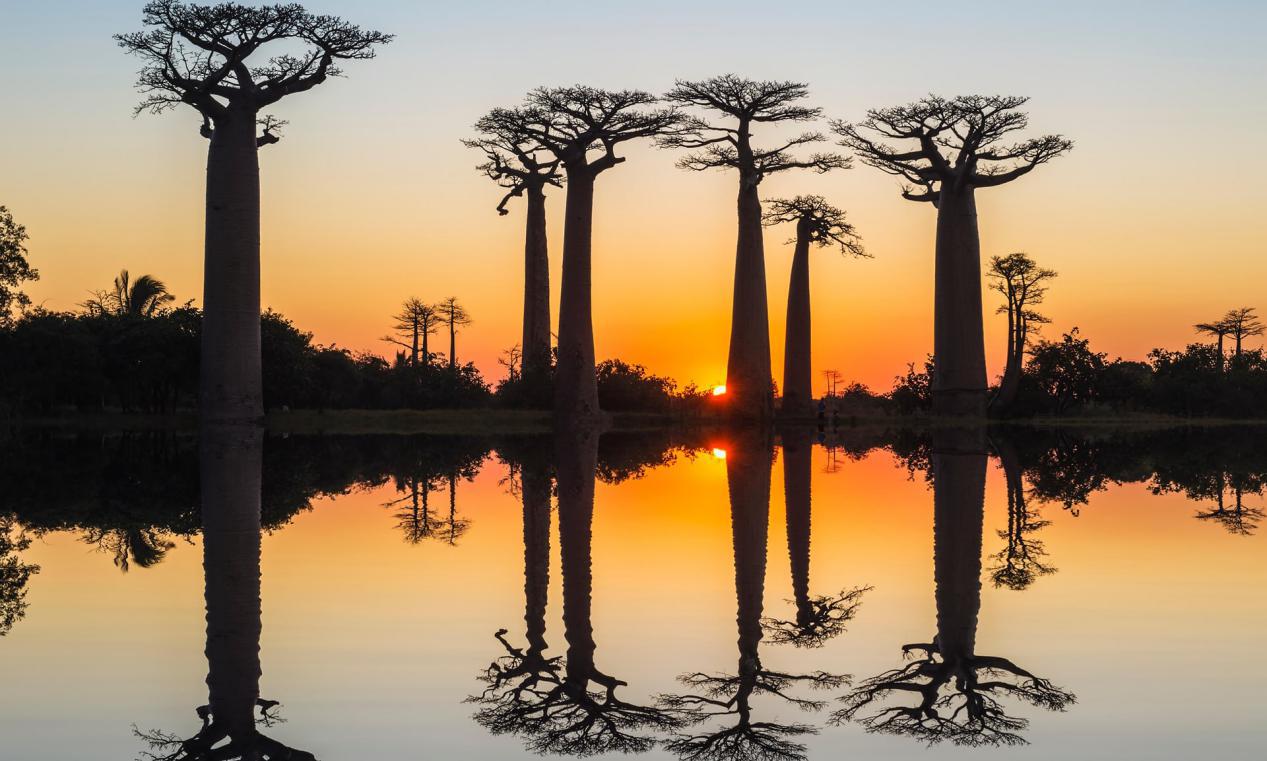 全球气候变化频繁,这种2500岁的生物也扛不住了