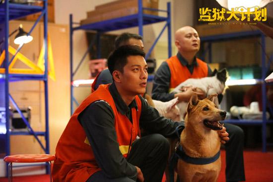 《监狱犬计划》上映曝推广曲MV 人犬互相治愈