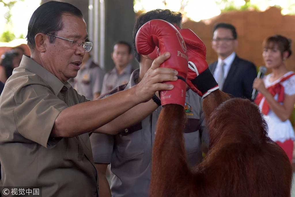 """柬埔寨首相洪森参观动物园 与猩猩拳击手""""过招"""""""