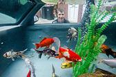 英国一男子将废弃汽车改造成巨型鱼缸