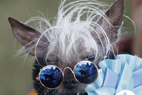 丑哭!2018年世界最丑狗评选结果出炉