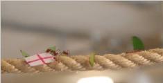 小蚂蚁神奇预测比赛胜负