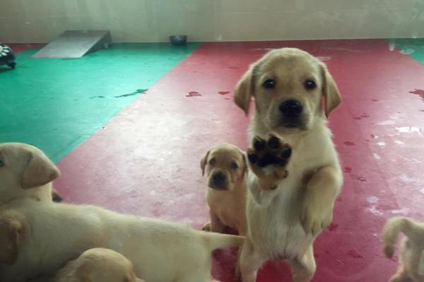 缉毒犬是怎样训练成的 探访海关总署北京缉私犬基地