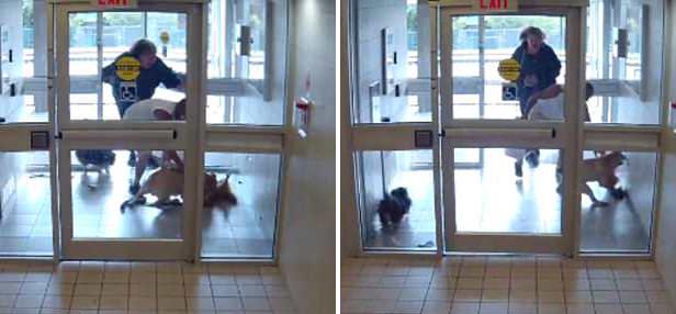 小狗随主人外出散步时突遭凶猛比特犬袭击死亡