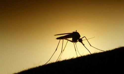 蚊子为啥独咬你?真相让你大吃一惊