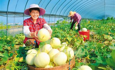 台湾甜瓜俏销南京