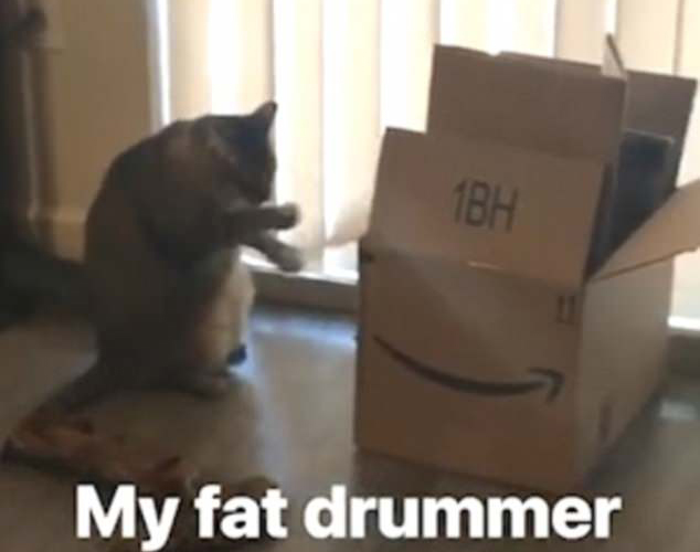 """酷!美一猫咪对着纸箱子练""""打鼓""""走红网络变明星"""
