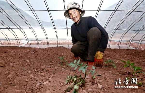 西藏昌都种上了天津菜