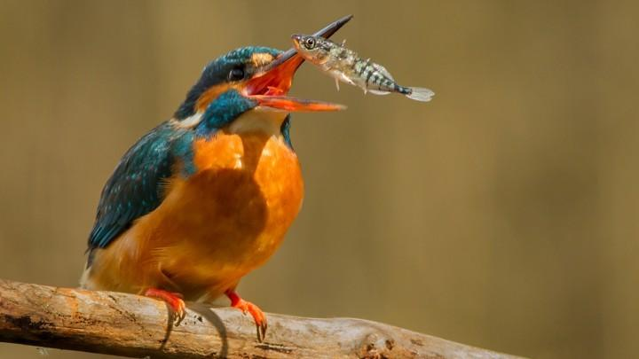 该寄生虫头带吸盘和挂钩:不感染动物却能控制寄主