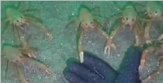 潜水员在海底遇到了这一幕