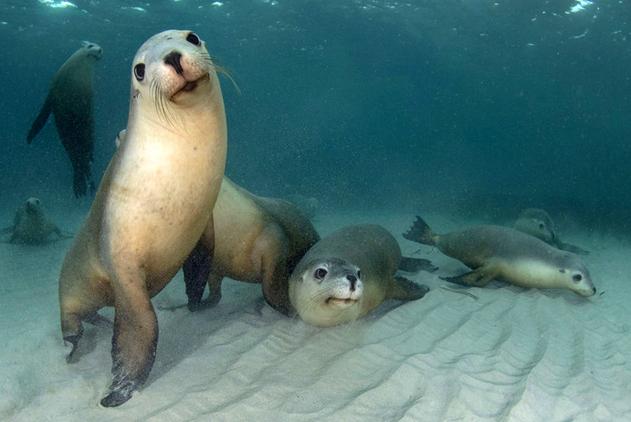 萌化了!摄影师为海豹群水下拍摄全家福
