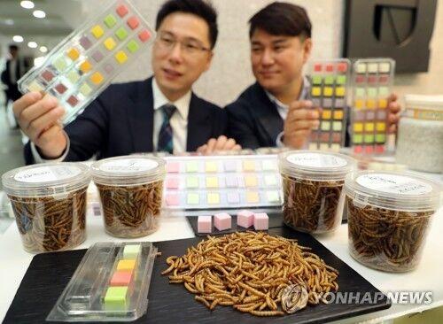 韩国人爱上营养昆虫餐 昆虫养殖供不应求