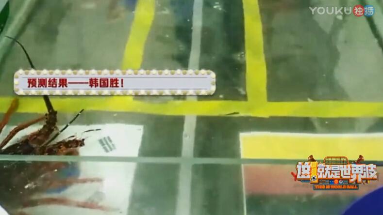 盒马网红龙虾优酷直播猜中德韩之战 世界杯预言神兽再添一员