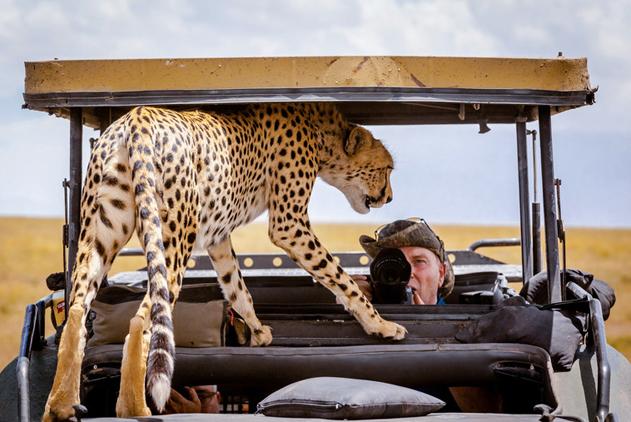 猎豹公然跳上游猎车乘凉 吓坏车内游客