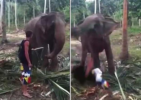 游客在泰国动物园惹大象不爽被撂倒