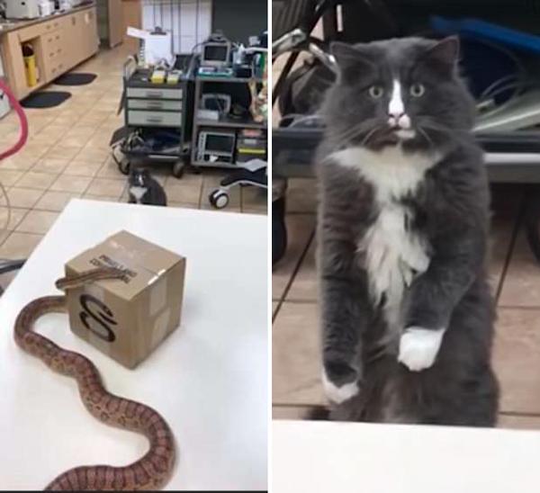 加拿大宠物猫首次见蛇 反应呆萌现魔性表情