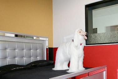加州现五星级宠物酒店 提供按摩泥浴修甲等服务