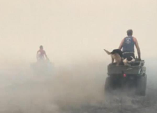 英国农场遭遇大火袭击 农民驰骋火场营救羊群