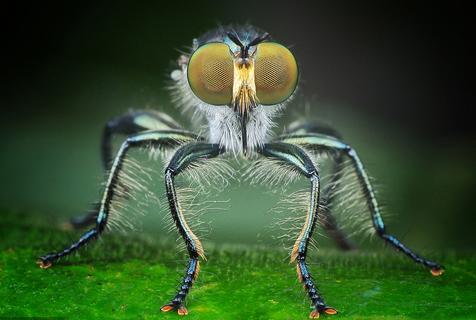 你敢和我对视吗? 印尼摄影师微距特写展现昆虫细节