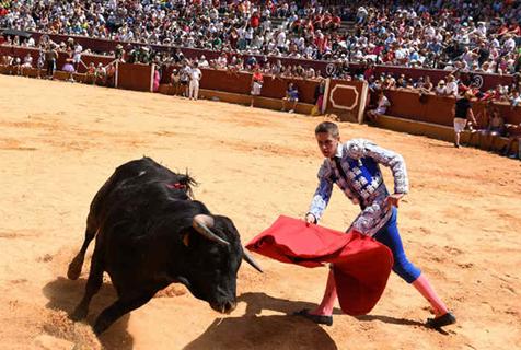 红布挑起的愤怒!西班牙斗牛场上演惊险一幕