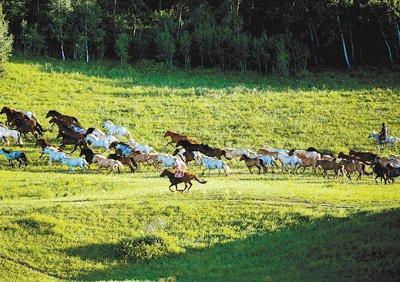 奔跑在草原最美的季节