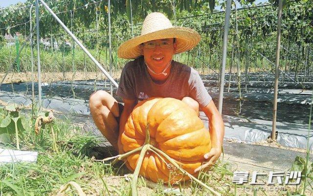 活久见!长沙巨型南瓜重 200 斤,每个卖 5000 元以上