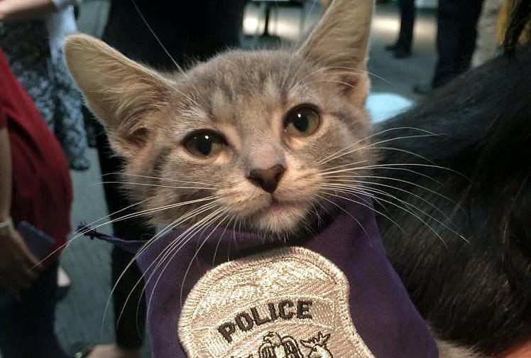 """美国一警察局履行承诺 招募""""警猫""""协助办公"""