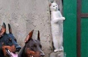 谁傲娇啊猫傲娇……