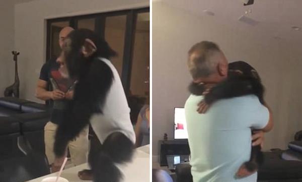 """美黑猩猩知恩图报 再见""""恩人""""热情拥抱"""