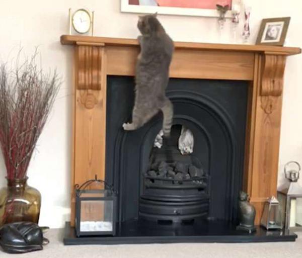 囧萌!小胖猫因太重攀爬壁炉失败掉落