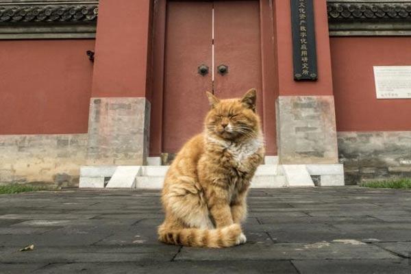 故宫网红猫去世 曾连续6次成功预测世界杯比赛胜负