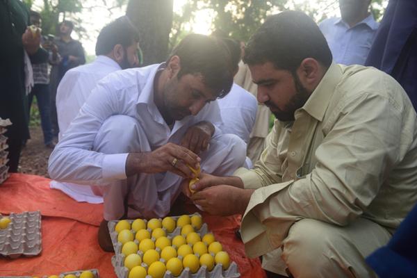 """是有多无聊?在印阿富汗人三五成群,上演""""斗煮鸡蛋"""""""