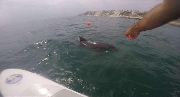 英国一家人出海偶遇海豚兴奋拍照留念